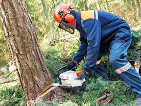 WHSC releases new training program for chainsaw operators